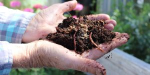 Get a wriggle on to our free composting workshop